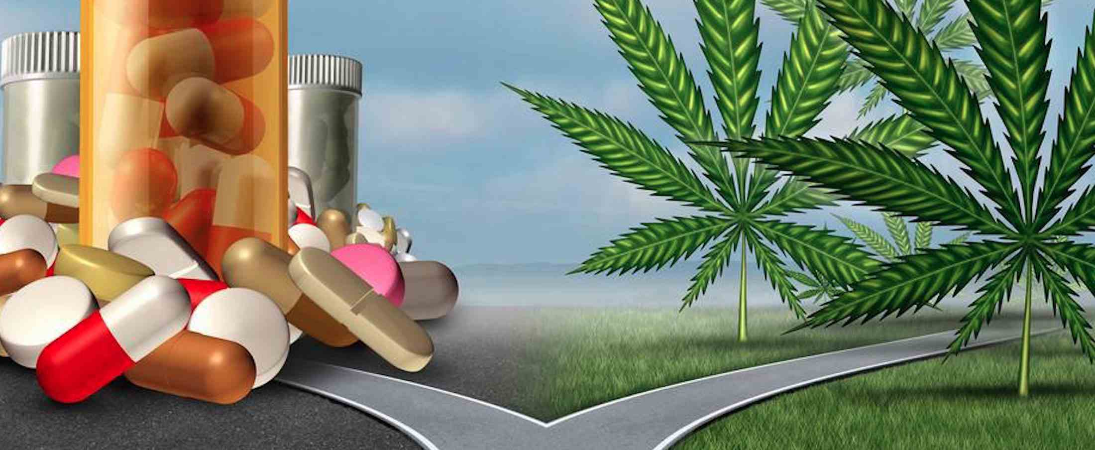 Painkiller addiction reduced with Cannabis